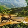 Hanoi to Sapa by luxury car transfer